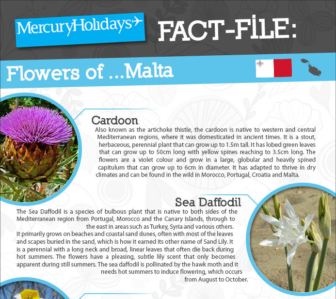 The flowers of Malta