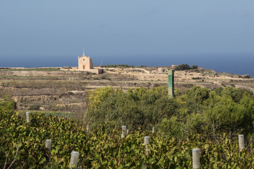Wine of Malta