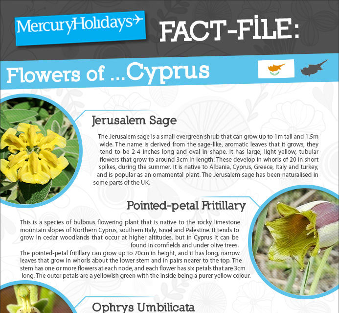 Fact file - the flowers of Cyprus