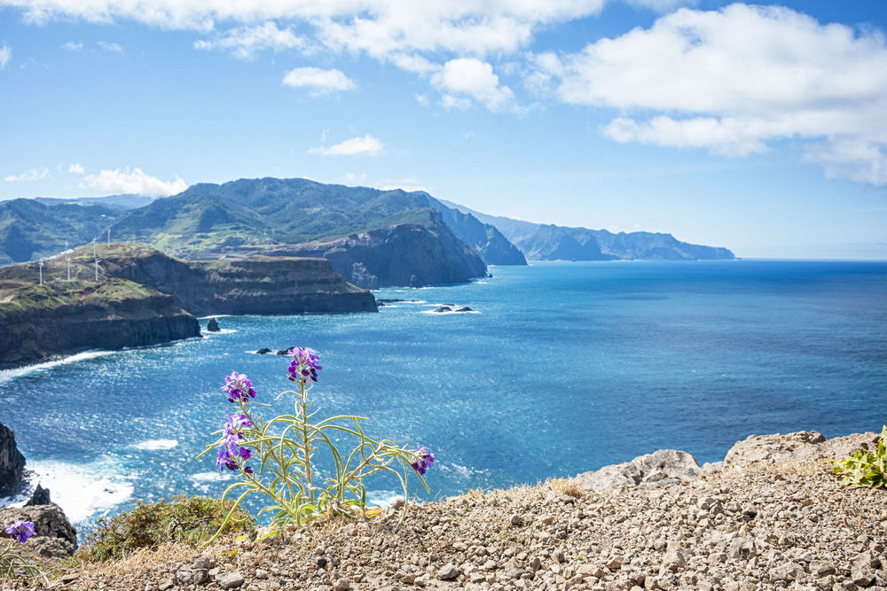 The discovery of Madeira