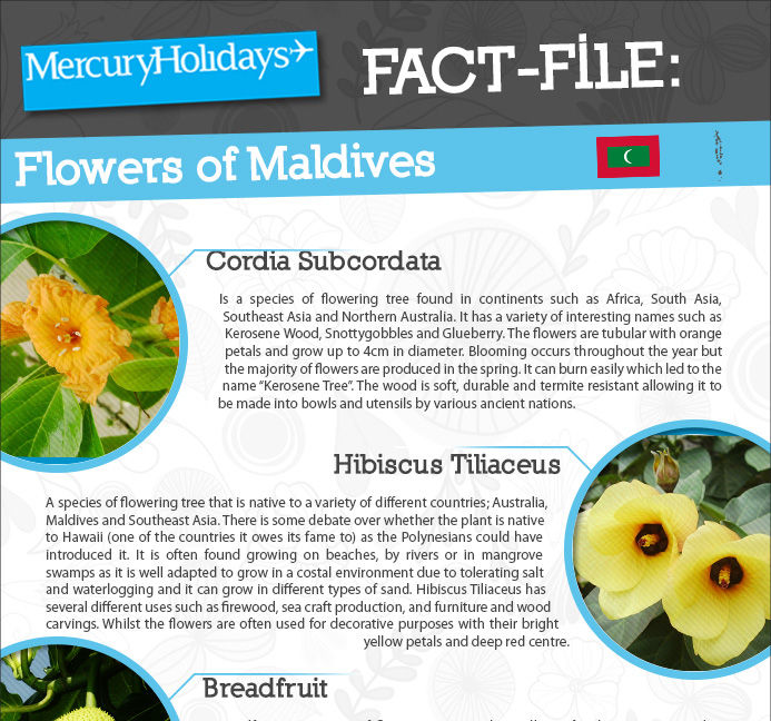 Flowers of the Maldives fact file