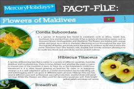 /maldives-holidays/