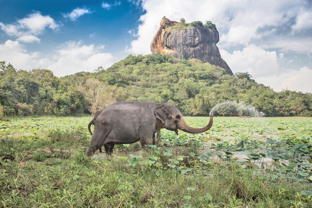 A guide to Sri Lanka in pictures
