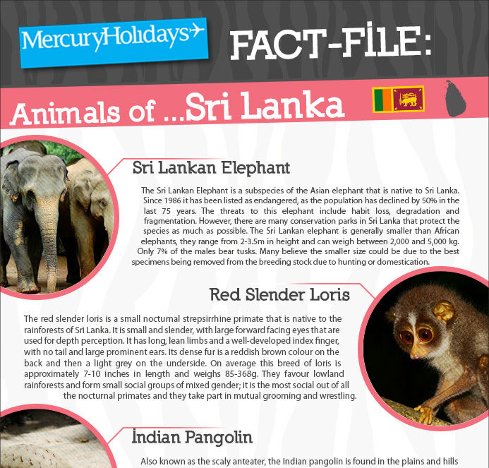 Animals of Sri Lanka - a fact file