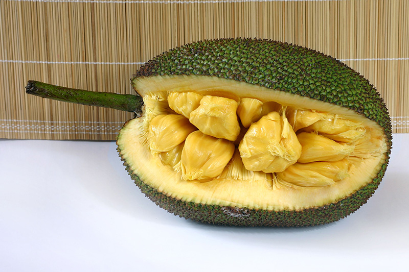 jackfruit thesis Descriptions and articles about the breadfruit, scientifically known as artocarpus altilis in the encyclopedia of life includes overview brief summary com.