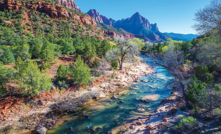 """Spring In Zion National Park"""