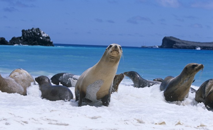 """Sea Lions on the beaches of Espanola Island"""