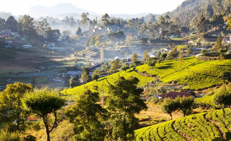 """Hill Country Nuwara Eliya"""