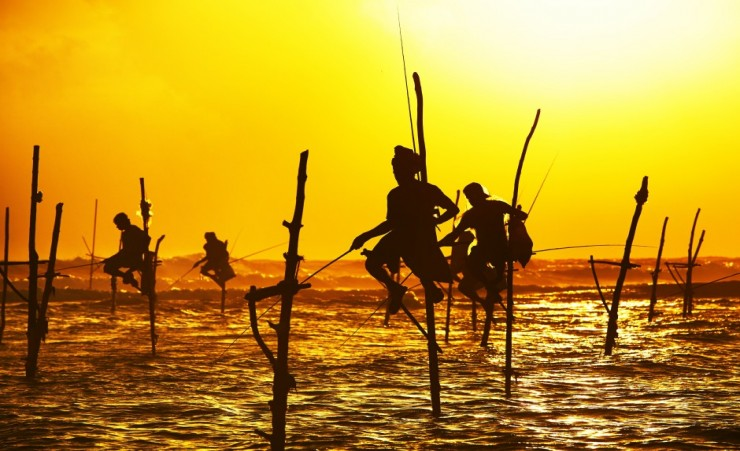 """Stilt Fishermen Galle"""